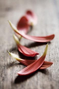 Quadro em vidro Zen - Red Leaves