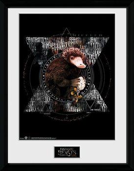 Fantastic Beasts - Niffler Circle Poster Emoldurado