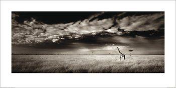 Reprodução do quadro  Ian Cumming  - Masai Mara Giraffe