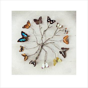 Reprodução do quadro Ian Winstanley - Butterfly Harmony