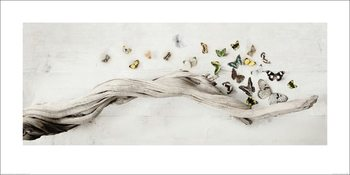 Reprodução do quadro  Ian Winstanley - Drift of Butterflies