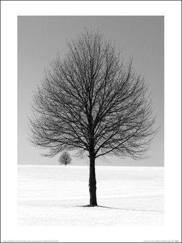 Reprodução do quadro Ilona Wellman - Winter Tree