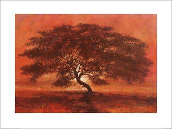 Reprodução do quadro Jonathan Sanders - Desert Tree