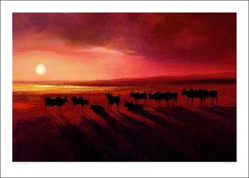 Reprodução do quadro Jonathan Sanders - Zebu At Dusk