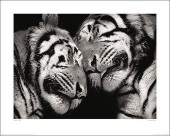 Reprodução do quadro Marina Cano - Sleeping Tigers