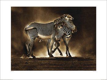 Reprodução do quadro Marina Cano - Zebra Grevys