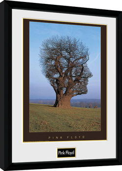 Pink Floyd - Tree Poster Emoldurado