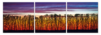 Quadro Red forest