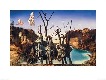 Reprodução do quadro  Salvador Dali - Swans Reflecting Elephants