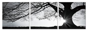 Quadro Tree - Silhouette (B&W)