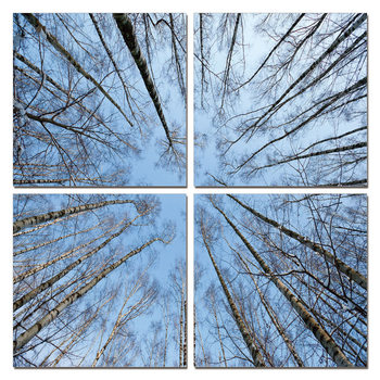 Quadro  Treetops