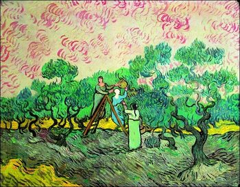 Reprodução do quadro  Van Gogh - La Raccolta Delle Olive