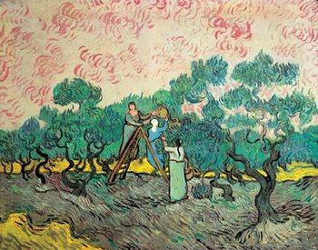 Reprodução do quadro Women Picking Olives, 1889