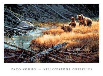 Reprodução do quadro Yellowstone Grizzlies