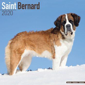 Calendar 2021 St Bernard