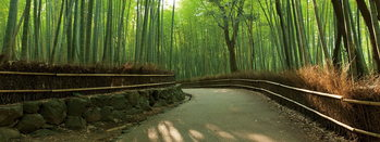 Tableau sur verre Bamboo Forest - Path
