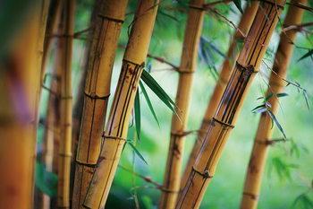 Tableau sur verre Bamboo - Fresh Nature