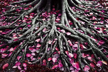 Tableau sur verre Pink World - Pink Roots