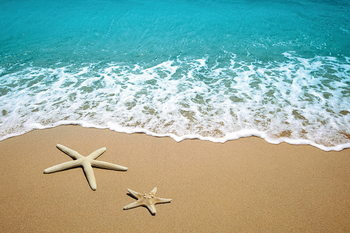 Tableau sur verre Sea - Stars in the Sand