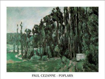 Poplars Taidejuliste
