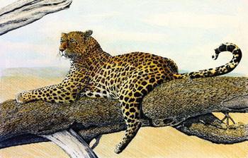 Resting Leopard Taidejuliste