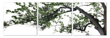 Deciduous tree Taulusarja