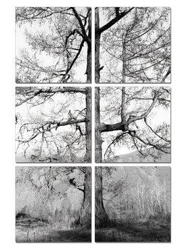 Gray tree Taulusarja