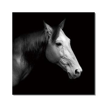 Horse - Russian Horse Rur b&w Taulusarja