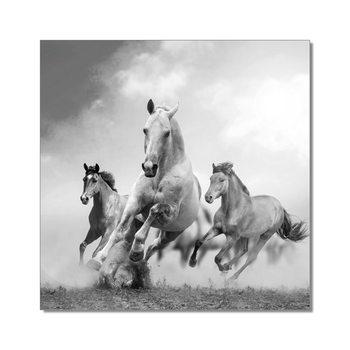 Horses - Running Horses b&w Taulusarja
