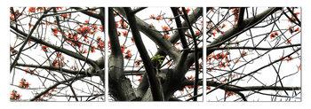 Look into the tree Taulusarja