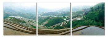 Plantations on the hills Taulusarja