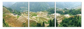 Terraced plantations Taulusarja