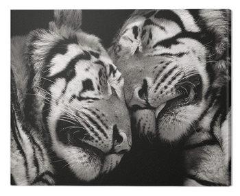 Tela Marina Cano - Sleeping Tigers