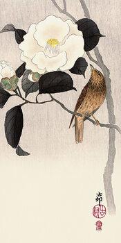 Tela Ohara Koson - Songbird and Flowering Camellia