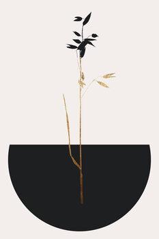 Tela Planta Negra