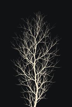 Tela The Tree WHITE