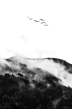 Tela The Wilderness