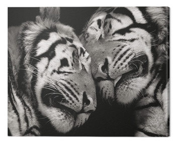 Tela  Marina Cano - Sleeping Tigers