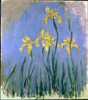 Tela  Yellow Irises; Les Iris Jaunes, c.1918-1925