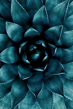 Valokuvatapetti Cactus No 9