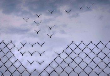 Valokuvatapetti Don´T Fence Me In!