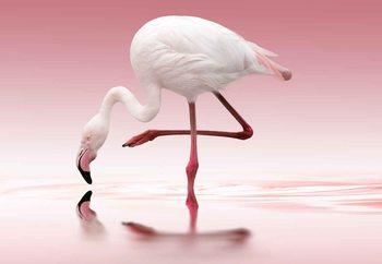 Valokuvatapetti Flamingo
