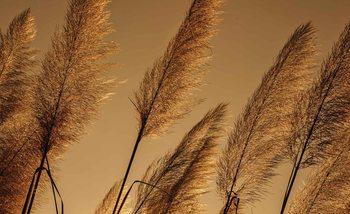 Valokuvatapetti Hierbas que soplan en el viento