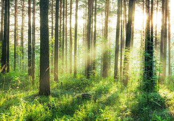 Valokuvatapetti Metsä - Sunmbeams