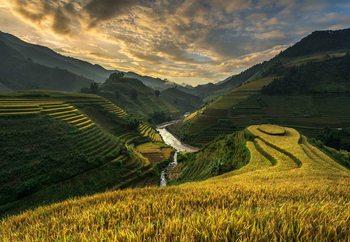 Valokuvatapetti Rice Terrace In Vietnam