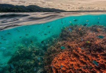 Valokuvatapetti Uri Marine Reserve