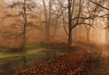 Valokuvatapetti Which Path