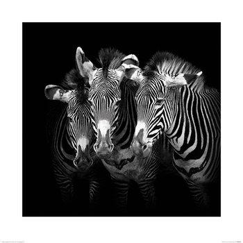Marina Cano - Shades of Grevy Art Print