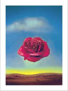 Medative rose Art Print