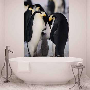 Animaux Pingouin Poster Mural